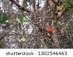 red male northern cardinal... | Shutterstock . vector #1302546463
