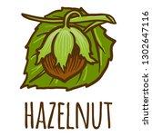 hazelnut icon. hand drawn... | Shutterstock .eps vector #1302647116