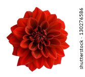 Red Dahlia Isolated On White...