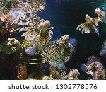 Exotic Lionfish  Lat.  Pterois...