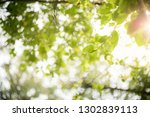 closeup nature view of green... | Shutterstock . vector #1302839113