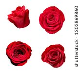 Stock photo collection of various roses on white background each one is shot separately 1302869860