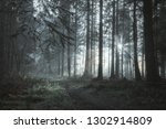 a beautifully moody forest path ... | Shutterstock . vector #1302914809