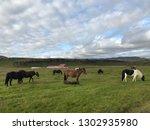 unique icelandic horse breed in ... | Shutterstock . vector #1302935980
