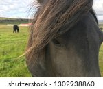 portrait unique icelandic horse ... | Shutterstock . vector #1302938860