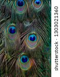 details of feathers male blue... | Shutterstock . vector #1303021360