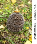 Small photo of Hedgehog in the autumn forest curled. Mushroom on tenterhooks