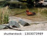 full body of swimming male... | Shutterstock . vector #1303073989