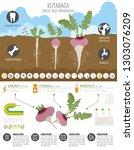 rutabaga beneficial features... | Shutterstock .eps vector #1303076209
