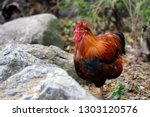 portrait of domestic adult... | Shutterstock . vector #1303120576