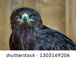 portrait of a steppe eagle ... | Shutterstock . vector #1303169206