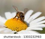 Detail Of Bee Or Honeybee In...