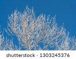 branch in hoarfrost on a...   Shutterstock . vector #1303245376