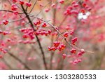 deciduous shrub  pink flowers...   Shutterstock . vector #1303280533