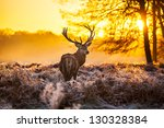 red deer in morning sun | Shutterstock . vector #130328384