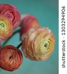 Bouquet Of Ranunculus On A...