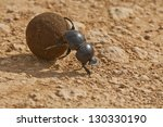 Dung Beetle Rolling Some Dung...
