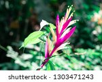 closeup fresh pink heliconia... | Shutterstock . vector #1303471243