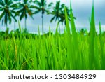 rice terrace field with green... | Shutterstock . vector #1303484929