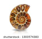 Ammonite Fossil Shell Isolated...