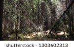 pine forest. depths of a forest.... | Shutterstock . vector #1303602313