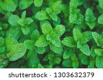 green peppermint leaves... | Shutterstock . vector #1303632379