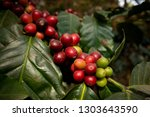 close up green yellow and red... | Shutterstock . vector #1303643590