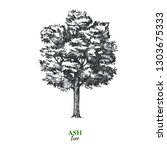 hand drawn sketch ash tree... | Shutterstock .eps vector #1303675333