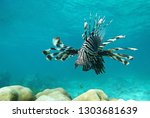 Common Lionfish Swimming Above...