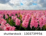 beautiful hyacinth field ...   Shutterstock . vector #1303739956