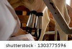 milking a cow with automatic... | Shutterstock . vector #1303775596