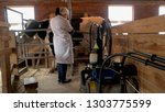 milkmaid milking cow at dairy... | Shutterstock . vector #1303775599