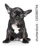 Stock photo french bulldog puppy posing on a white background 130380746