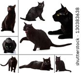Stock photo collection of black cat on white background 130383638