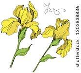 Vector Yellow Iris Floral...