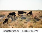 sheep on pasture | Shutterstock . vector #1303843399
