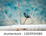 free black bird perched on a... | Shutterstock . vector #1303934380