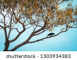 free black bird perched on a... | Shutterstock . vector #1303934383