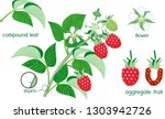 parts of plant. morphology of... | Shutterstock .eps vector #1303942726