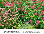 colorful flowers in summer... | Shutterstock . vector #1304076133