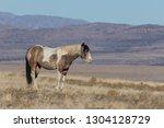 beautiful wild horse in the... | Shutterstock . vector #1304128729
