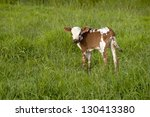 Brown And White Nguni Calf...