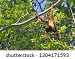amazed monkey hanging by the... | Shutterstock . vector #1304171593
