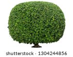 shaped trimmed bush for garden... | Shutterstock . vector #1304244856