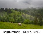 mountain grassland with grazing ... | Shutterstock . vector #1304278843