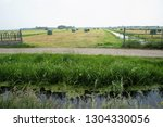 bales of hay lie scattered in a ...   Shutterstock . vector #1304330056