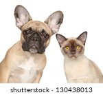 Stock photo close up portrait of a cat and dog isolated on white background 130438013