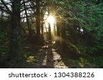 sunbeam in forest at viking...   Shutterstock . vector #1304388226