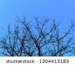 the tree deciduous in the spring | Shutterstock . vector #1304413183