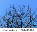 the tree deciduous in the spring | Shutterstock . vector #1304413186